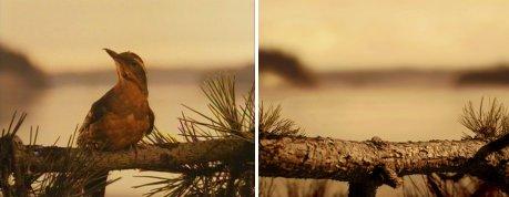 4_bird.jpg